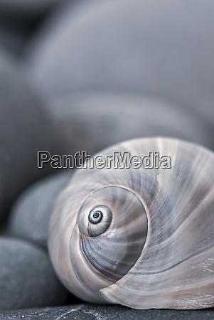 naturaleza muerta con concha de caracol